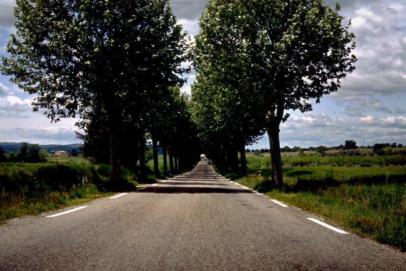 Tree Lined Lane<br /> <br /> Day 29 - May 9 - 36 miles - The road from Uzès to Moussac (D982) was a treat; often huge sycamore trees lined both sides of the road, uniting in a canopy overhead.