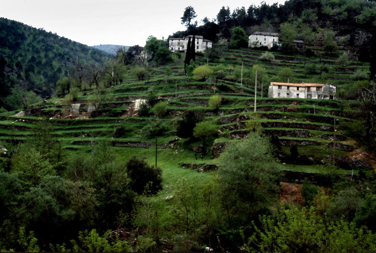 Terraced Farm, River Gard