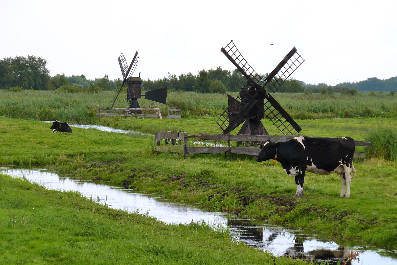 Working windmills; some of the very few left in existence