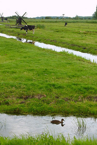 Small canals for irrigation as well as separating the sheep from the cows from the grain fields