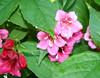 More pretty flowers...