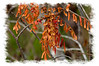 Red leaves, photographed in the Everglades at Long Pine Key campground; look at it in the largest sizes....it looks better.