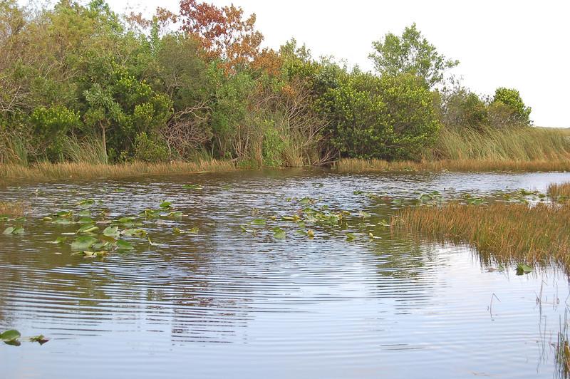 Water Lillies Abound