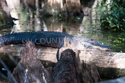 2009 Everglades-95