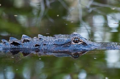 2009 Everglades-155