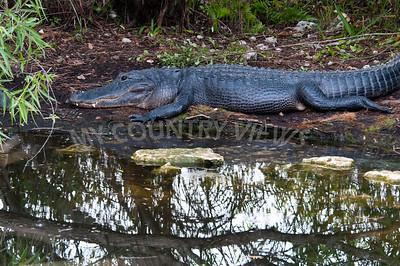 2009 Everglades-159