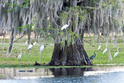2009 Everglades-55