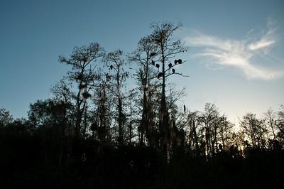 2009 Everglades-276