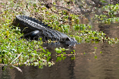 2009 Everglades-42