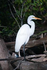 2009 Everglades-74