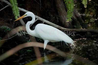 2009 Everglades-195