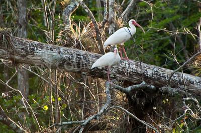 2009 Everglades-221