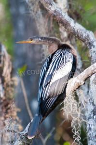 2009 Everglades-110