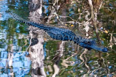 2009 Everglades-84
