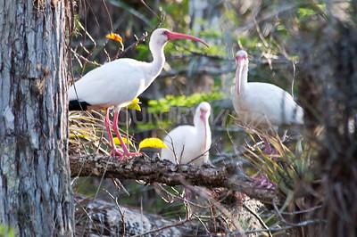 2009 Everglades-113