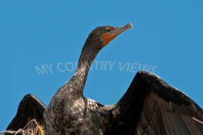 2009 Everglades-67