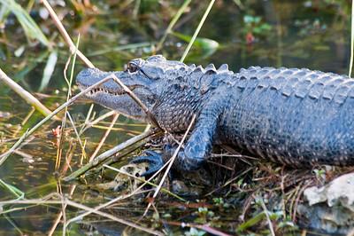 2009 Everglades-128
