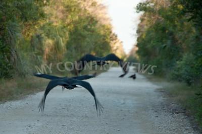 2009 Everglades-268