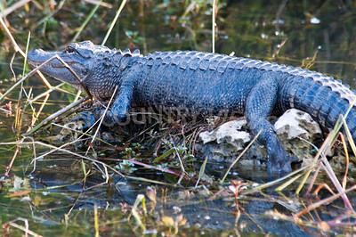 2009 Everglades-124