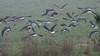 Ibis in the mist...<br /> June 2012