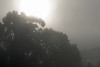 Morning fog along the Princes Highway, eerie and beautiful<br /> July 2011