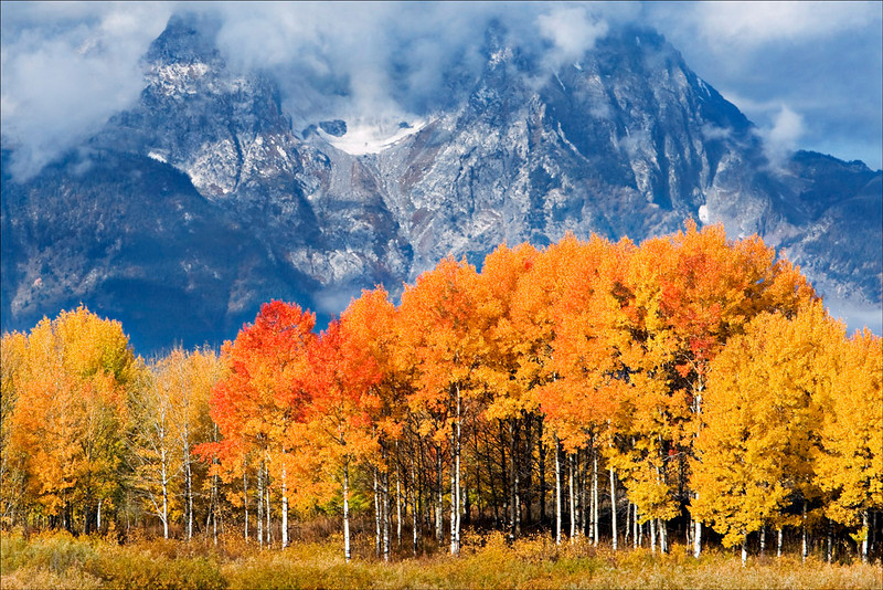"ASPENS ""ABLAZE"" AGAINST MT. MORAN"