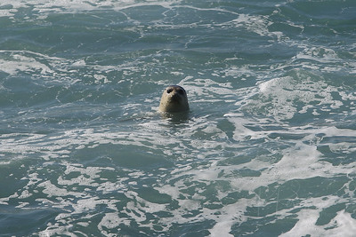 E21G1214 Curious seals.