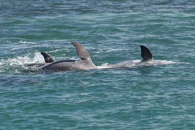 Echo Dolphin/Snorkeling Catamaran