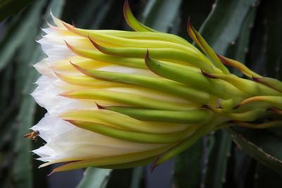 Sulawesi - flower