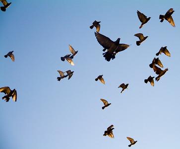 The Birds 15th October 2011