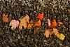 Leaves & stones