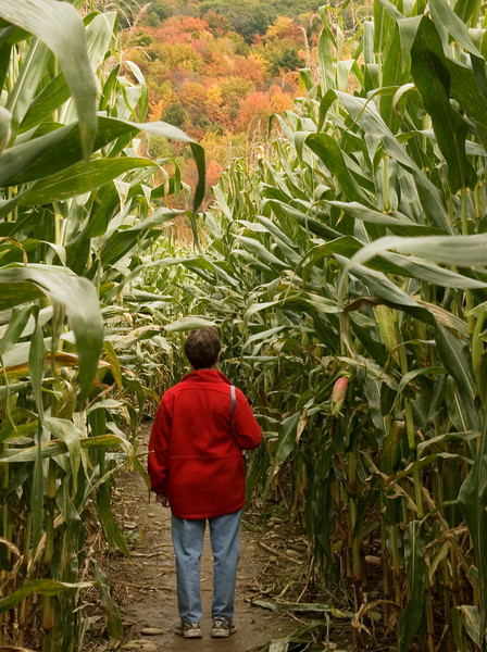 Enjoying some fall color from the corn maze.