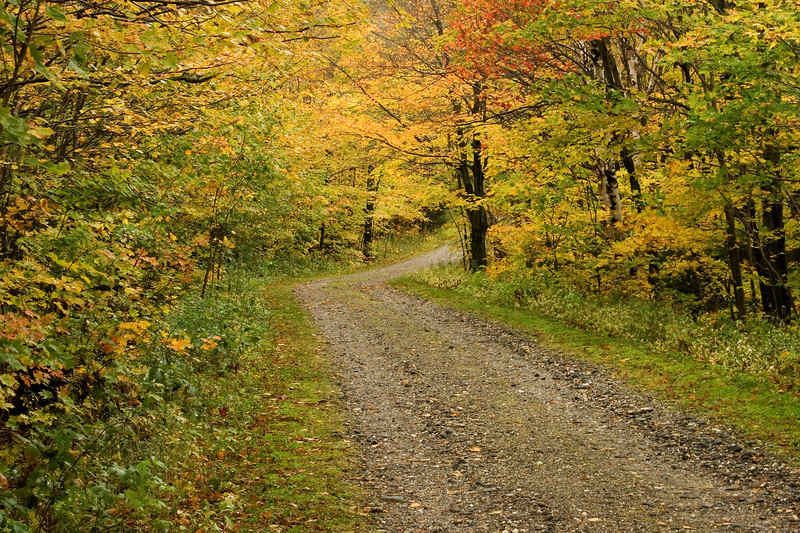 Fall color at the Mt. Mansfield trail head.