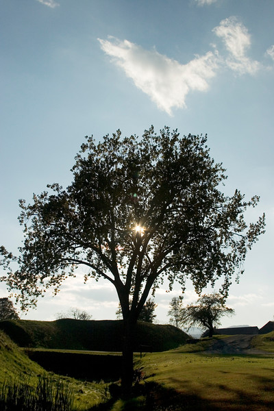 Sun and tree at Crown Point, NY