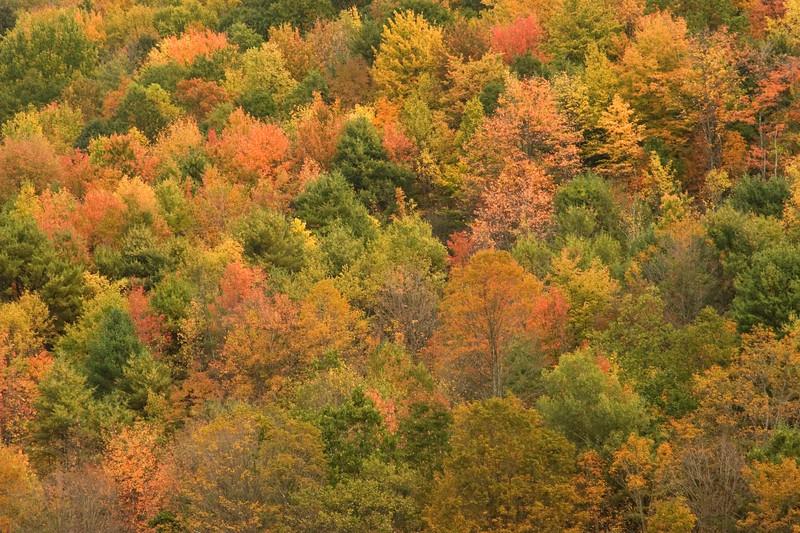 Fall color, Newark Valley, NY