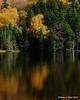 Tree reflecting in Saco Lake