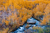 A stream flows amidst fall colors