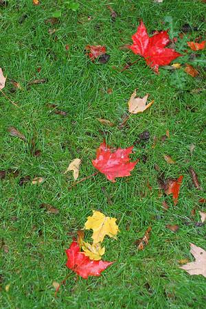 Fall Foliage 2006