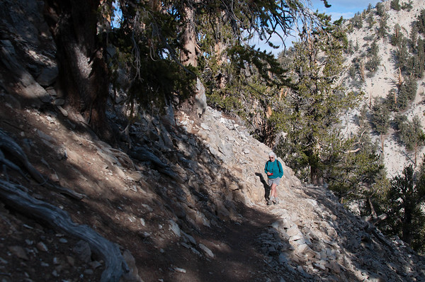 Soozi walking on the trail at the Ancient Bristlecone Pine Forest National Park