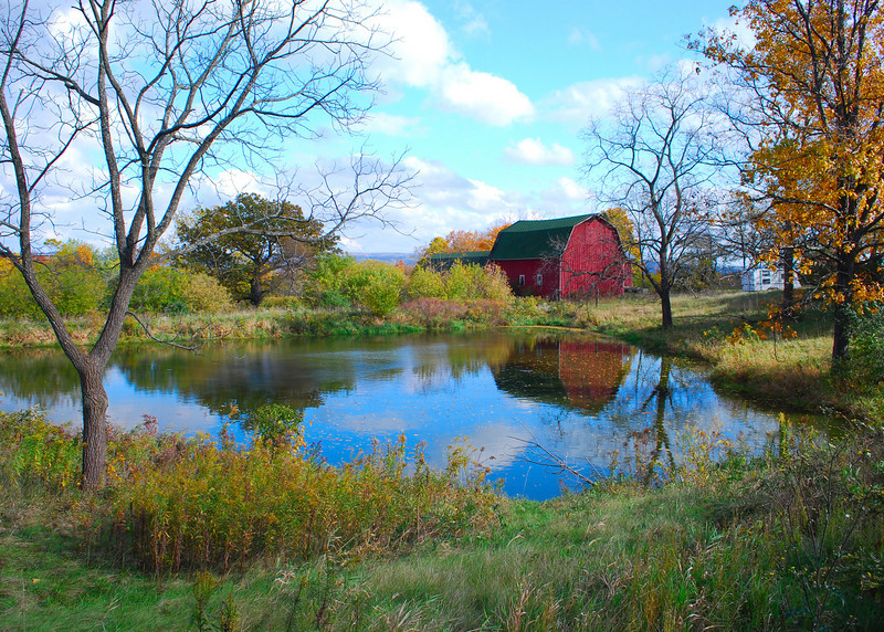 Old Farm Pond<br /> <br /> Along Rt. 14 North of Watkins Glen