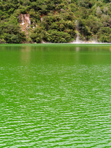 Cyanobacteria bloom in a thermal lake near Kerosene Creek, Rotorua
