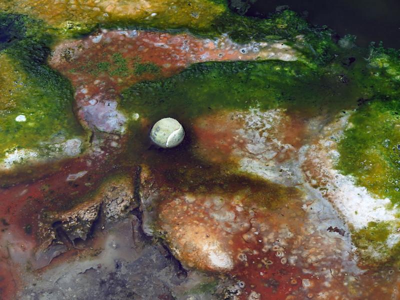 Cyanobacteria in a hot spring in Rotorua