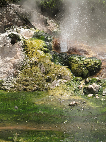 Small geyser and cyanobacteria at Waimangu