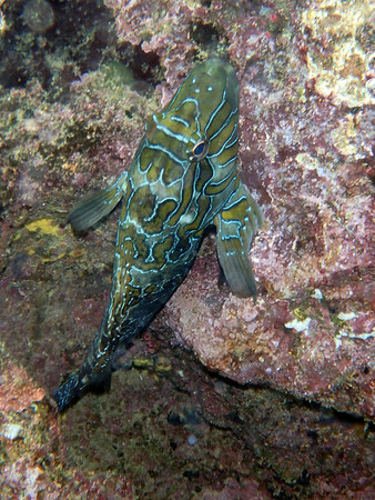 Galapagos Islands, Eric's Underwater Photos July 2014