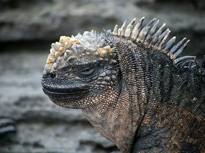 Galapagos Islands, The Wonderful Animals, July 2014