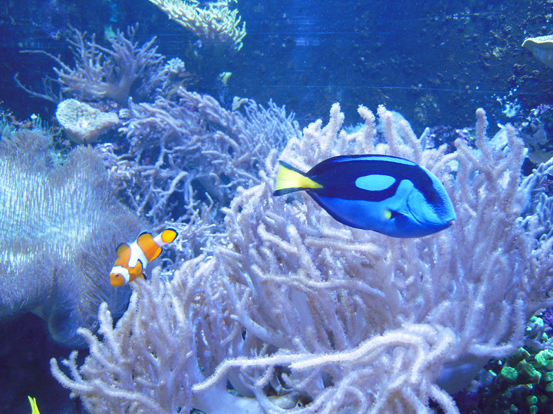 Nemo and Dory, Kelly Tarlton's, Auckland.