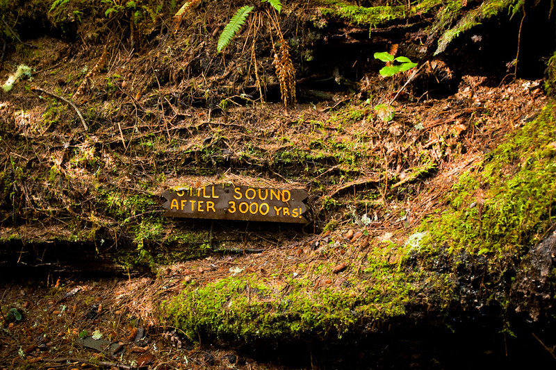 The <b>fallen tree</b> is still sound after 3000 years, not the sign.