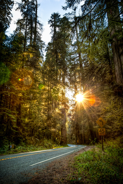 Jedediah Smith Redwoods State Park<br /> <br /> I had to pull over and get this while the moment was there.