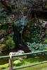 012013_007969 ICC sRGB 16in x 24in pic