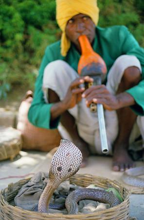 The Deaf Cobra & Swaying Keeper - Agra, India